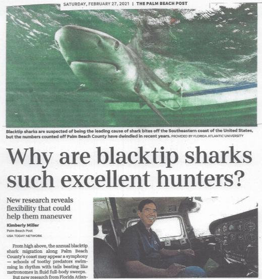 PB Post Shark Migration Article-1
